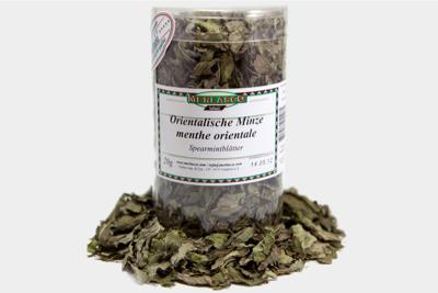 Orientalische Minze (mentha spicata/vi..